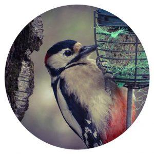 Vogels in de tuin, B&B Wachtpost 29, Volkel