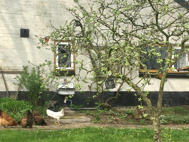 Tuin met kippen bij B&B Wachtpost 29